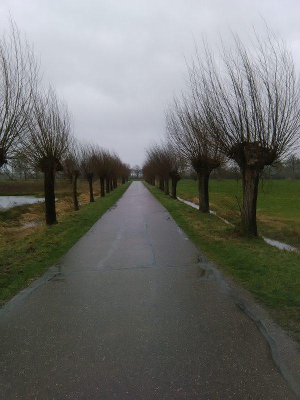 Kopfweidenallee - am Rode Beek Wanderweg
